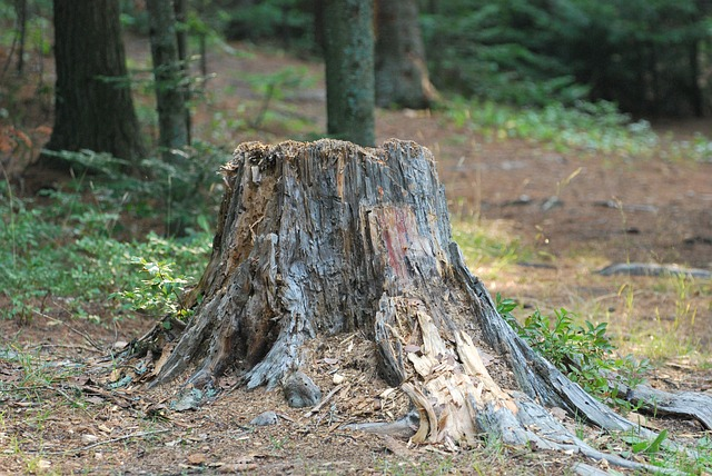 The Importance of Tree Stump Removal in Denver